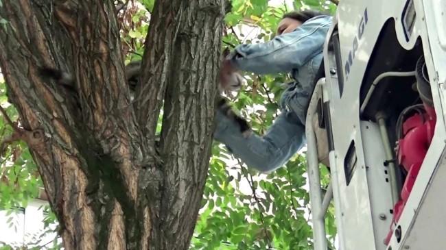 Sokak köpeklerinin kovaladığı kedi mahsur kaldığı ağaçtan kurtarıldı