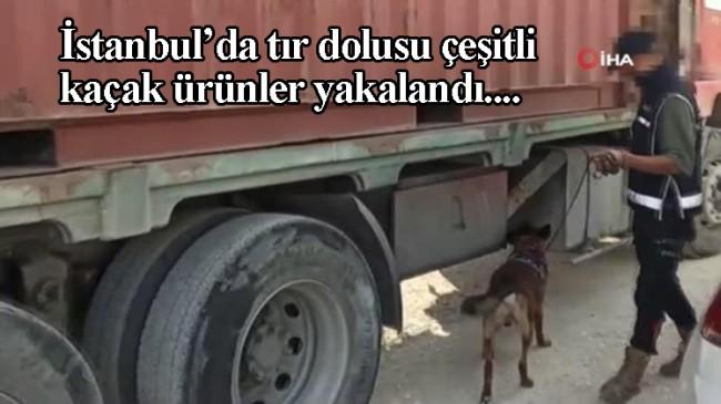 İstanbul'da 7 milyon liralık vurguna hazırlanan kaçakçılık şebekesi çökertildi