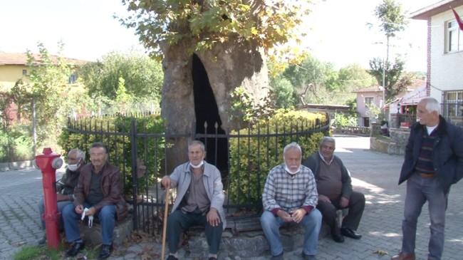 Tarihi Kabakoz Çınar ağacı köy halkına gölge olmaya devam ediyor